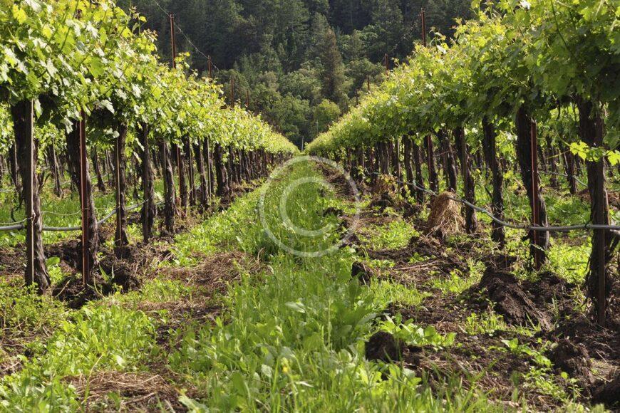 10 Wine Essentials